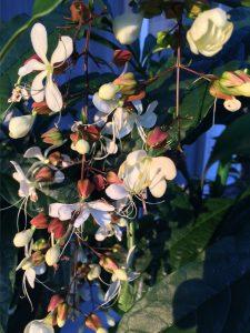 訪問マッサージさきの花の写真