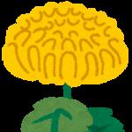 菊の花の絵